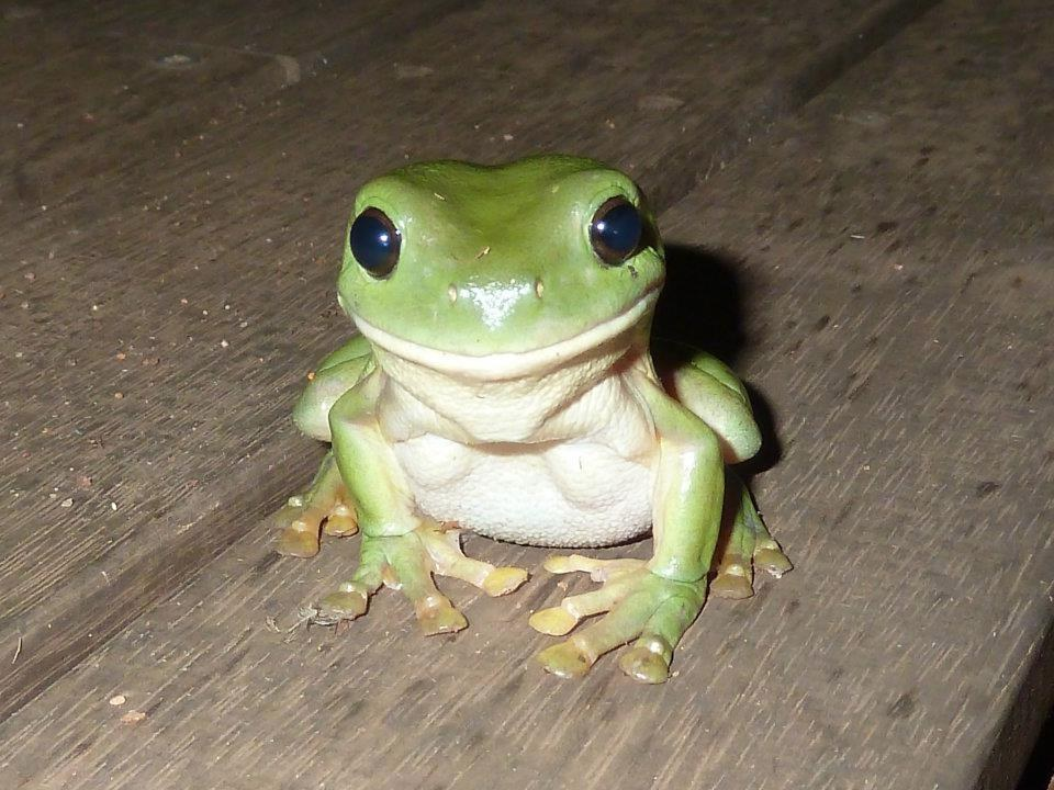 Frog Dating The Fjord A In